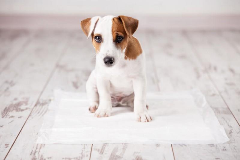щенок и пеленка