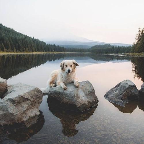 собака у воды