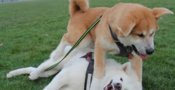приучить собаку не лаять